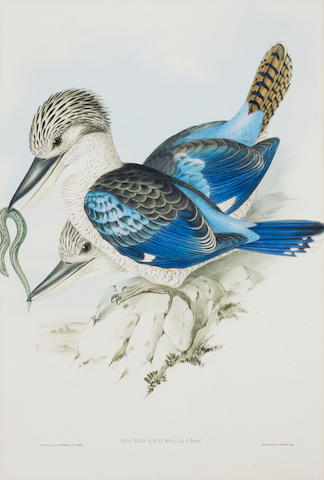 John Gould (British, 1804-1881) Nine hand-coloured lithographs from Birds of Australia Entitled Leach's Kingfisher, Rose-hill parakeet, Nankeen Kestril, Gang-gang Cockatoo, Rose-breasted Cockatoo, Albert Lyre Bird , on wove, published by Hullmandel & Walton, 517 x 314mm (and smaller) (20 3/8 x 12 3/8 in) (SH) (unframed) (9)