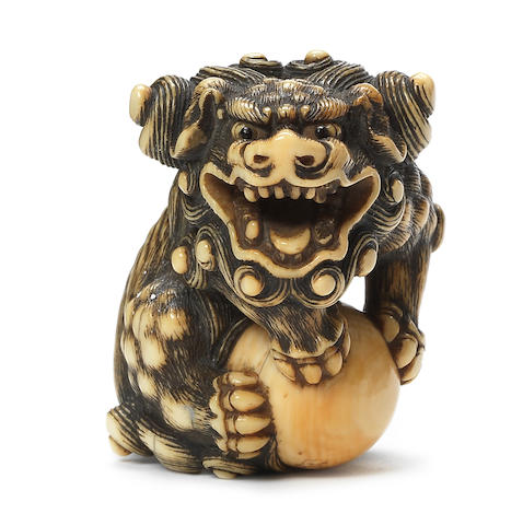 A rare ivory netsuke of a shishi By Sadayoshi, Osaka, early 19th century