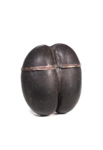 A Coco de Mer nut Lodoicea maldivica