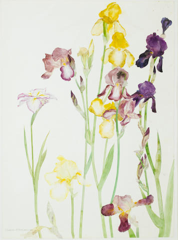 Dame Elizabeth Blackadder, OBE RA RSA RSW RGI DLitt (British, born 1931) Irises 80 x 57.8 cm. (31 1/2 x 22 3/4 in.)