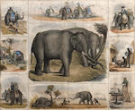 Three hand coloured prints of insects together with a pair of prints of insects and a print of Indian elephants
