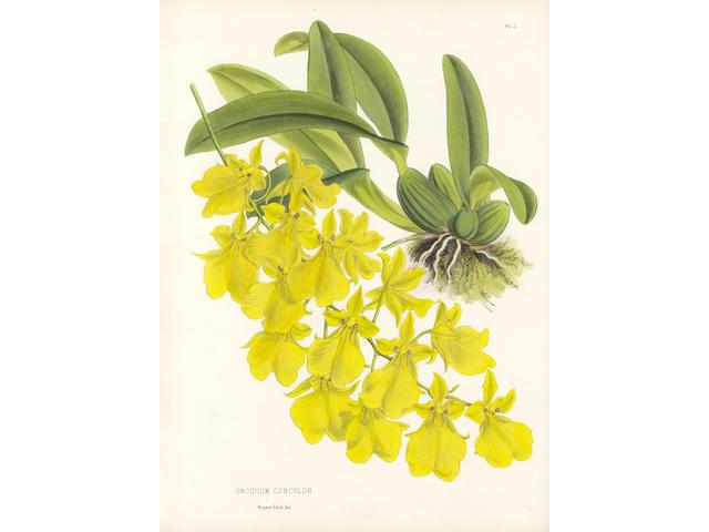 WARNER (ROBERT) The Orchid Album, vol. 1-3 (of 11), 1882-84