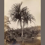 CEYLON SCOWEN (CHARLES T.) An album of 24 views, [c.1885]