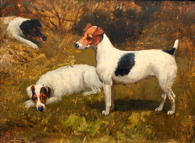 George Paice (British, 1854-1925) Study of three Jack Russells