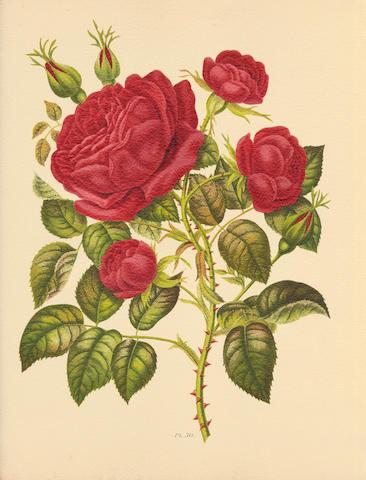 HARIOT (PAUL) Le livre d'or des roses. Iconographie, histoire et culture de la rose, [1903]