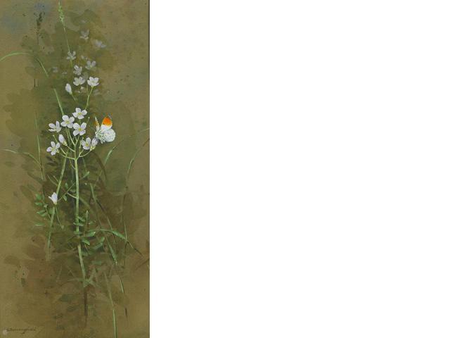 Gordon Beningfield (British, 1936-1998) Orange tip butterfly in grasses