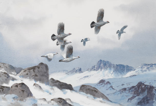 John Cyril Harrison (British, 1898-1985) Ptarmigan over the high tops