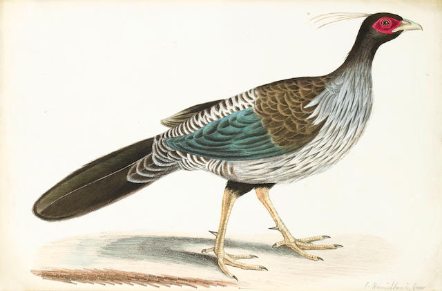 HAWKINS (BENJAMIN WATERHOUSE) Argus Pheasant Hen; and 4 other hand-coloured lithographs, 1829 (5)