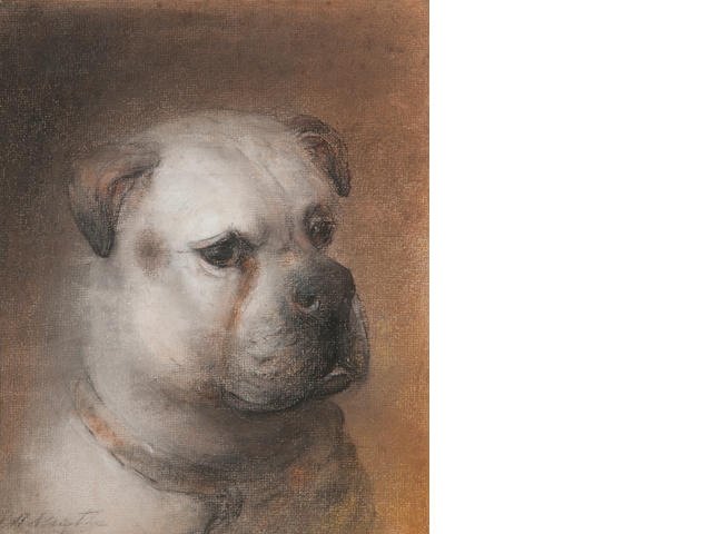 Edward Robert Smythe (British, 1810-1899) Head of a bull terrier