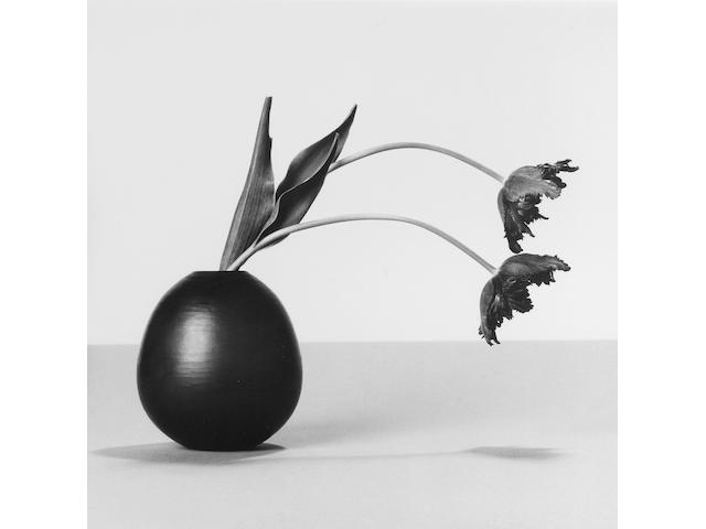 Robert Mapplethorpe (American, 1946-1989) Tulips, 1984