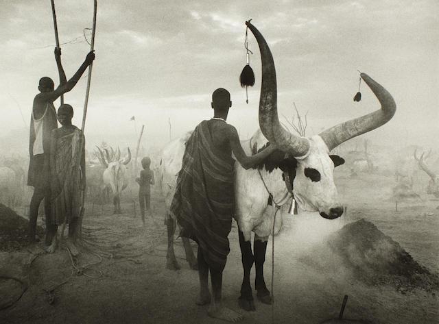 Sebastião Salgado (Brazilian, born 1944) Dinka Cattle Camp, Southern Sudan, 2006  Paper 50 x 60.2cm (19 5/8 x 23 11/16in), image 36.8 x 50.9cm (14 1/2 x 20in).