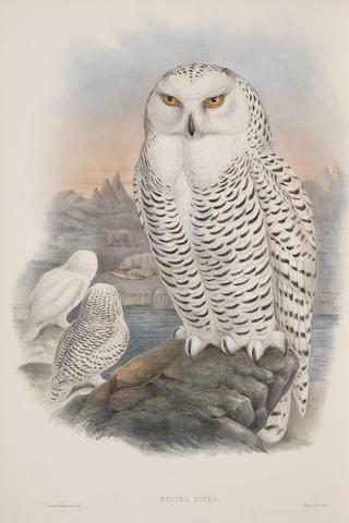 GOULD (JOHN) The Birds of Great Britain, 5 vol., 1862-1873