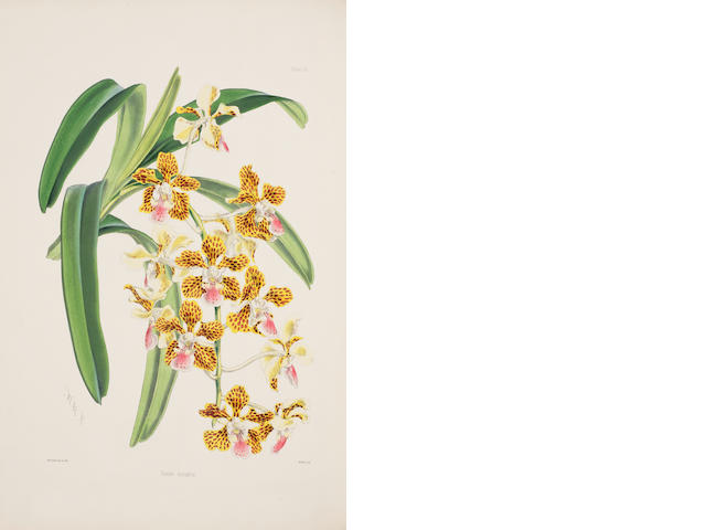 WARNER (ROBERT)  Select Orchidaceous Plants, 2 vol. [First and Second Series], 1862-1875