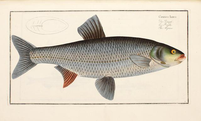 BLOCH (MARC ELIESER) Ichthyologie, ou histoire naturelle, générale et particulière des poissons, parts 1-2, 7-8 and 11-12 (of 12) in 3 vol.