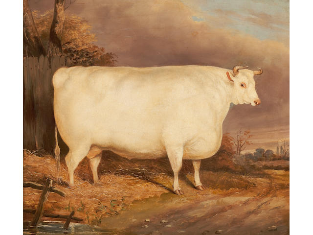 British School, 19th Century The White Steer