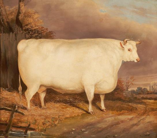 British School, 19th Century The White Steer