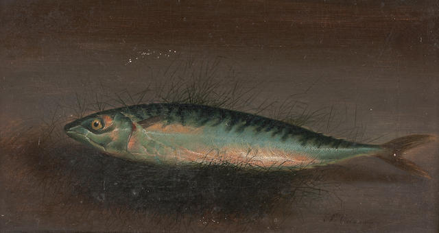 S. Colman (19th Century) A Mackerel