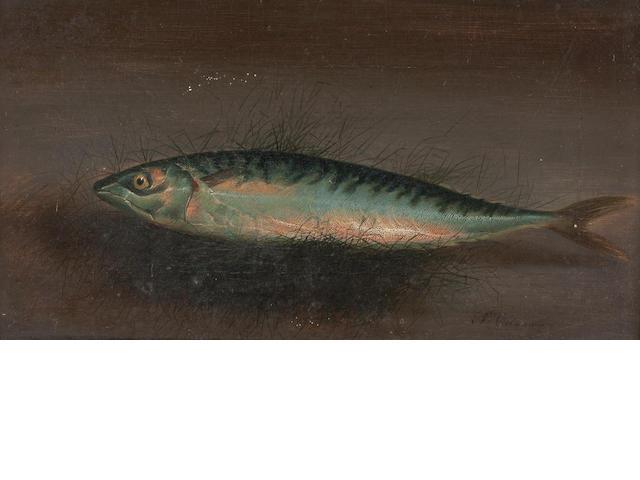S. Colman (19th Century) Portrait of a Mackerel