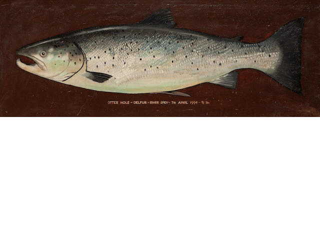 A painted salmon 'Otter Hole Delfur River Spay 7 April 1954, 31 pounds'