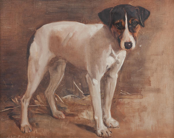 Samuel Fulton (British, 1855-1941) A Parsons Jack Russell (study)