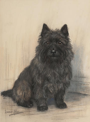 Marion Rodger Hamilton Harvey (British, 1886-1971) A Cairn terrier ; 38 x 29cm (14 15/16 x 11 7/16)