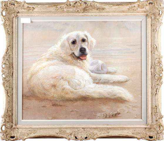 "Spencer Roberts (born 1920) ""Jenny"", a golden retriever on a beach"