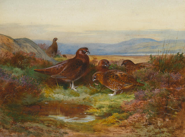Archibald Thorburn (British, 1860-1935) Grouse in autumn