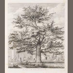 STRUTT (JACOB GEORGE) Sylva Britannica; or Portraits of Forest Trees, Distinguished for their Antiquity, Magnitude, or Beauty