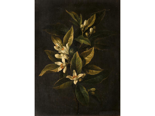 Follower of Jean-Baptiste Monnoyer (Lille 1636-1699 London) Still life of roses; still life of stephanotis