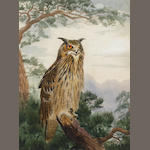 John Cyril Harrison (British, 1898-1985) Eagle Owl