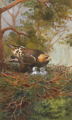 John Cyril Harrison (British, 1898-1985) Brooding chicks