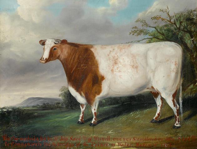 English Provincial School A brown and white heifer