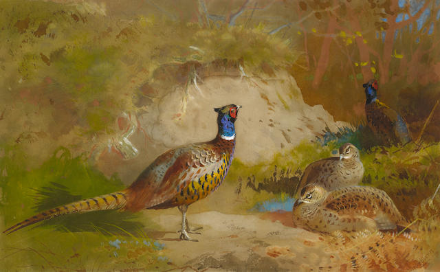 Archibald Thorburn (British, 1860-1935) Pheasants in a landscape