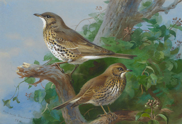 Archibald Thorburn (British, 1860-1935) Mistle-Thrush and Song-Thrush