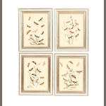 A set of twelve framed hand coloured engravings of Butterflies and their transformations