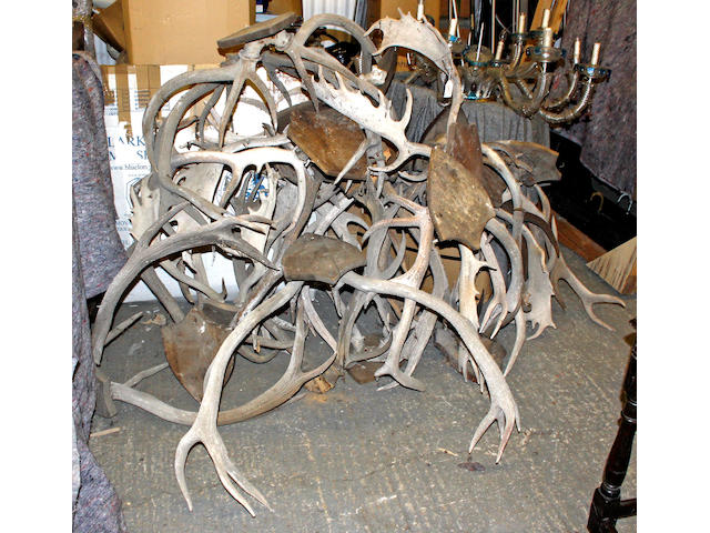 A collection of wall mounted antlers