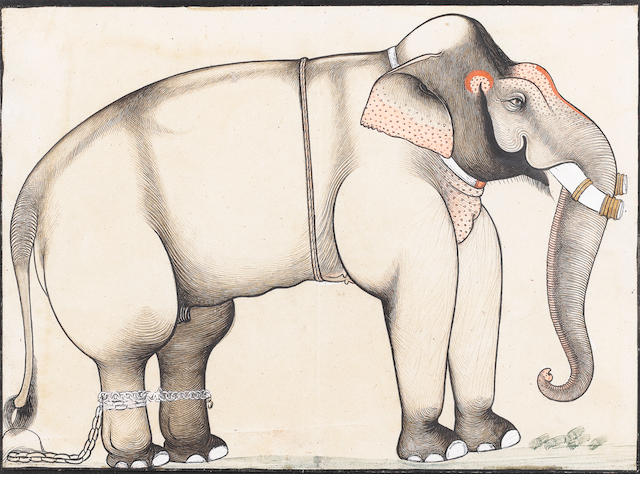 A study of an elephant Sawar, circa 1740