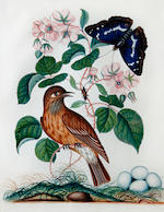 Attributed to Anna Blackburne (British, 1740-1793) A collection of twenty-one bird and insect studies amongst fruit and flowers each 21 x 17cm (8 1/4 x 6 11/16in).(21)
