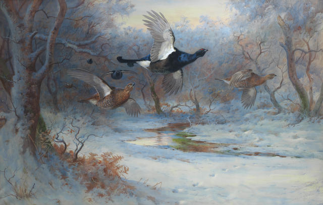 Archibald Thorburn (British, 1860-1935) Blackcock and Grouse in flight - Winter