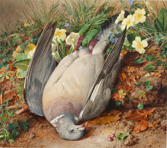 William Henry Hunt, OWS (British, 1790-1864) Pigeon on a primrose bank