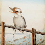 Neville William Cayley (Australian, 1887-1950) Kookaburra on a fence with a snake