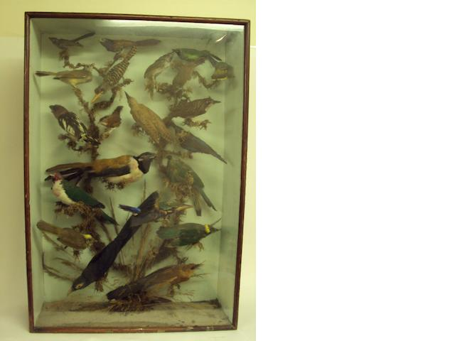 A cased taxidermy group of exotic birds