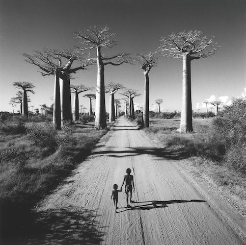 Chris Simpson (British, born 1952) Allée des Baobabs, Madagascar, 1997
