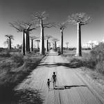 Chris Simpson, Allee des Baobabs, ed. 5/10, giclee, 44 x 45in, framed. Allée des Baobabs Paper sight area 108.5 x 108cm (42 11/16 x 42 1/2in), image 101.8 x 101.4cm (40 1/16 x 39 15/16in).