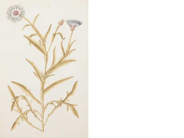 French School (late 18th/early 19th century) Two botanical studies 49 x 31.5cm