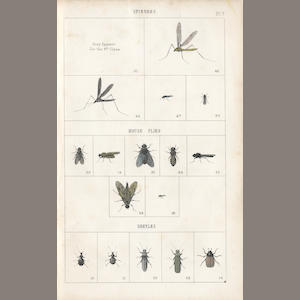 THEAKSTON (MICHAEL)] A List of Natural Flies That Are Taken by Trout, Grayling, & Smelt, in the Streams of Ripon, first edition, second issue, 1853