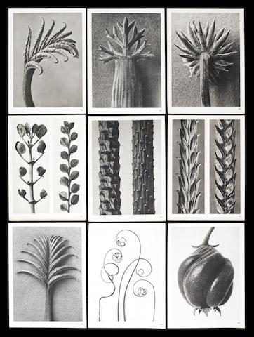 Karl Blossfeldt (German, 1865-1932) Wundergarten der Natur, pub. Verlag für Kunstwissenschaft, Berlin, 1932. 1st Edition. Each plate measures paper 31.7 x 24.5cm (12 1/2 x 9 5/8in), image 28.5 x 22cm (11 1/4 x 8 11/16in).