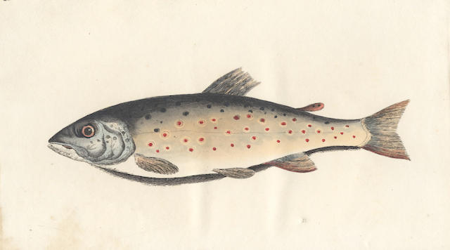 BAINBRIDGE (GEORGE COLE) The Fly Fisher's Guide, Illustrated by Coloured Plates, Representing Upwards of Forty of the Most Useful Flies, Accurately Copied from Nature, 1828