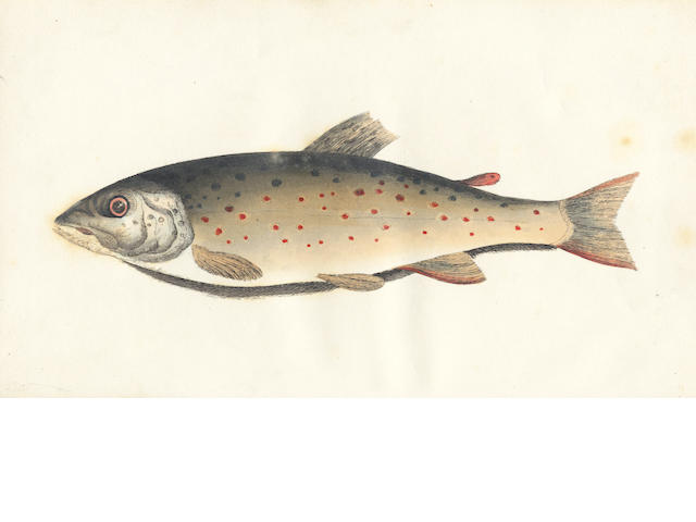 BAINBRIDGE (GEORGE COLE) The Fly Fisher's Guide, Illustrated by Coloured Plates, Representing Upwards of Forty of the Most Useful Flies, Accurately Copied from Nature, 1834