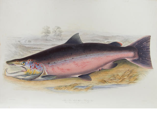 JARDINE (WILLIAM) British Salmonidae], 1839-1842